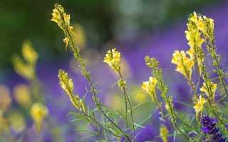 Льняное масло для женщин: польза и вред для организма, как правильно принимать вариант в капсулах