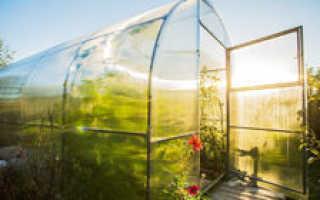Выращивание огурцов в теплице (43 фото): правильная посадка семенами в конструкции из поликарбоната и уход