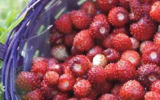 Варенье из земляники «Пятиминутка» на зиму (16: фото): пошаговые рецепты приготовления земляничного варенья с целыми ягодами