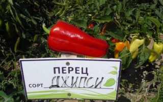 Перец «Джипси F1» (15 фото): урожайность и описание сладкого сорта, характеристика и отзывы