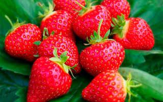 Клубника «Вима Ксима» (12 фото): описание сорта садовой земляники, отзывы садоводов