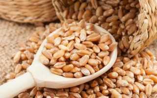 Как прорастить пшеницу? Как проращивать пшеницу в домашних условиях для еды и как правильно выбрать зерно