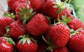 Клубника «Дукат» (21 фото): описание раннего садового сорта земляники, размер и вкус ягод, отзывы садоводов