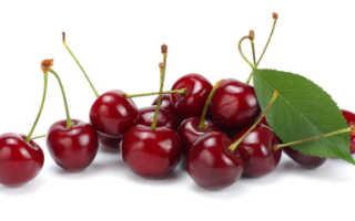 Почему не плодоносит черешня? Что делать, если цветет и нет плодов