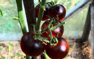 Черные помидоры (34 фото): «Негритенок» и «Барон», характеристики и описание сортов томата «Бизон» и «Трюфель»