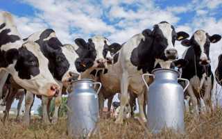 Пастеризованное молоко: что это такое, температура пастеризациии и технология производства, срок годности продукта