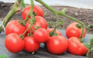Томат «Большая мамочка» (14 фото): описание, характеристика и урожайность сорта помидоров, отзывы