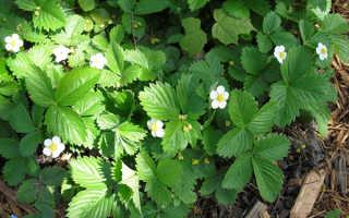 Что посадить в тени на даче: растения любящие тень