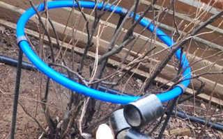 Как подвязать смородину? 16 фото Подвязка кустов своими руками, как правильно оградить чёрный сорт