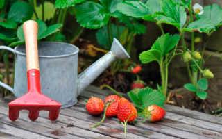 Уход за клубникой во время плодоношения: как ухаживать за кустами летом в период созревания ягод