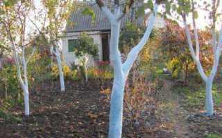 Как правильно белить деревья весной. Рецепты побелочной смеси