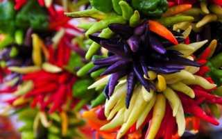 Декоративный перец (46 фото): выращивание комнатного острого растения на подоконнике и в горшке на балконе, уход в домашних условиях