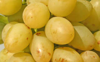 Виноград «Аркадия» (30 фото): подробное описание сорта с характеристикой «Настя Розовая», как выращивать в Подмосковье, отзывы