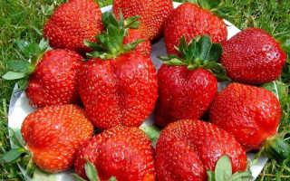 Клубника «Королева Елизавета 2» (30 фото): описание сорта, размножение ремонтантной садовой ягоды, выращивание и уход, отзывы