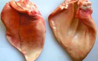 Свиные уши (17 фото): рецепты приготовления вкусных копченых и маринованных свиных ушек. Калорийность, польза и вред блюд