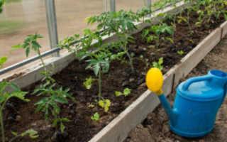 Чем подкормить помидоры после высадки в теплицу? Первая подкормка томатов, какие удобрения использовать, чтобы был хороший урожай