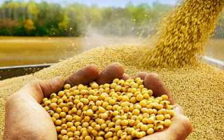Соевое масло: полезные свойства и противопоказания нерафинированного масла из сои, соответствие ГОСТу и применение в косметологии