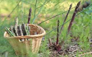 Спаржа (50 фото): что это такое, как растет и выглядит зеленый овощ и где распространяется