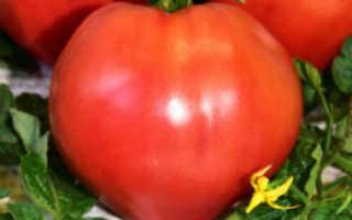 Томаты «Воловье сердце» (21 фото): характеристика и описание сорта, урожайность помидоров и высота куста, отзывы