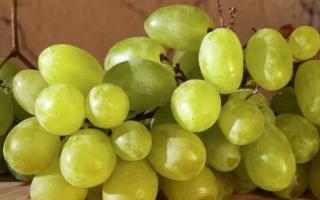 Виноград «Зарница» (11 фото): описание сорта и отзывы