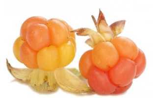 Полезные свойства и противопоказания морошки (26 фото): в чем польза ягода, как использовать масло семян