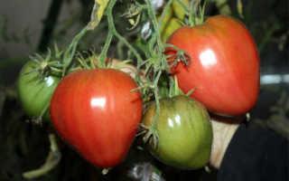 Томаты «Буденовка» (34 фото): характеристика и описание сорта помидоров, урожайность и высота, отзывы тех, кто сажал