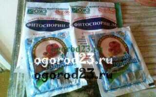 Фитофтора на помидорах (43 фото): чем обработать растения в открытом грунте и в теплице, признаки болезни на рассаде томатов