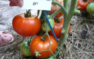 Томат «Хлебосольный» (12 фото): характеристика и описание сорта помидоров, урожайность и высота куста, отзывы