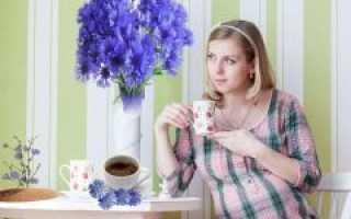 Цикорий при беременности: можно ли пить растворимый напиток беременным на ранних и поздних сроках
