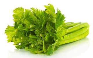 Сельдерей: польза и вред стеблей для здоровья женщины, свойства овоща в сыром виде