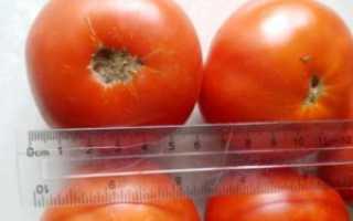 Томат «Иришка F1» (14 фото): характеристика и описание сорта, отзывы об урожайности помидоров