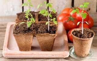 Когда высаживать помидоры в теплицу? Высадка рассады в парник из поликарбоната в 2020 году, как