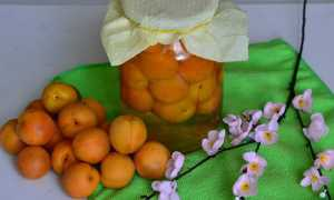 Как сделать компот из абрикосов? Как приготовить на зиму? Почему помутнел? Рецепты с грушами и