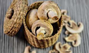 Выращивание шампиньонов в домашних условиях, условиях и бизнес