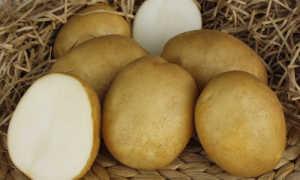 Картофель «Лидер» (19 фото): характеристика и описание сорта, вкусовые качества и отзывы