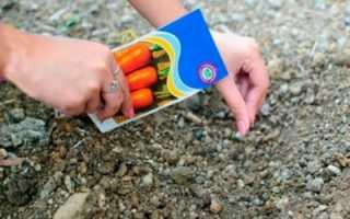 Посадка и уход за морковью в открытом грунте: секреты выращивания хорошего крупного урожая и пошаговая агротехника