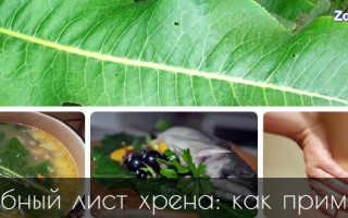 Листья хрена (20 фото): полезные и лечебные свойства и противопоказания, применение в народной медицине, как приготовить компресс