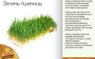 Ростки пшеницы (22 фото): польза и вред, как употреблять зеленые побеги пророщенных зерен, отзывы
