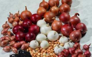 Схемы и способы посадки лука-севка весной (18 фото): китайский вариант на репку, пошаговое описание выращивания на гребнях
