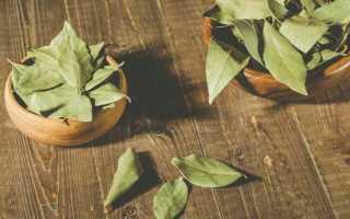Лавр (Лавровый лист): лечебные свойства и противопоказания, отвар и настой