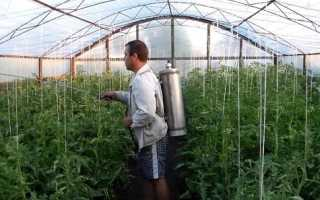 Подготовка теплицы весной к посадке томатов: как подготовить помидоры и обработать почву