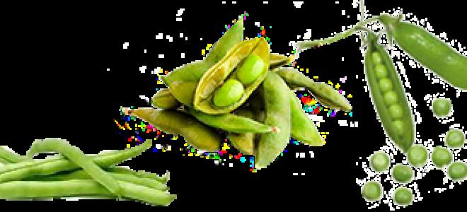 Кукуруза: это фрукт, овощ или злак, относится ли к семейству бобовых
