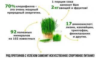 Сок ростков пшеницы: польза и вред пророщенной пшеницы, как сделать напиток из проростков в домашних