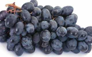 Виноград «Аттика» (25 фото): описание плодового сорта, уход и выращивание в Подмосковье, отзывы
