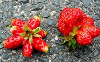 Почему ягоды клубники корявые? Что делать, если ягоды мелкие, причины развития деформированых плодов