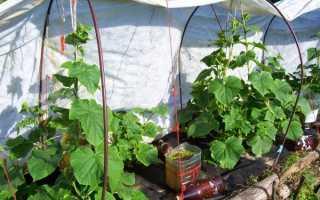 Огурцы под укрывным материалом (19 фото): чем лучше укрывать своими руками после посадки в открытом грунте, выращивание под пленкой