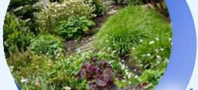 Лунный Посевной Календарь Огородника Садовода На Май 2020 Года