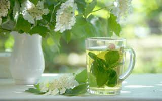 Чай с мятой: полезные свойства и вред, рецепты мятного чая, при беременности